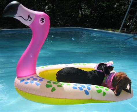 pool rafts for dogs flamingo pool float for quot dogs quot swimming pool s s tips tricks