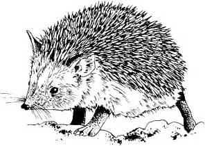 hedgehog coloring pages free hedgehog coloring pages