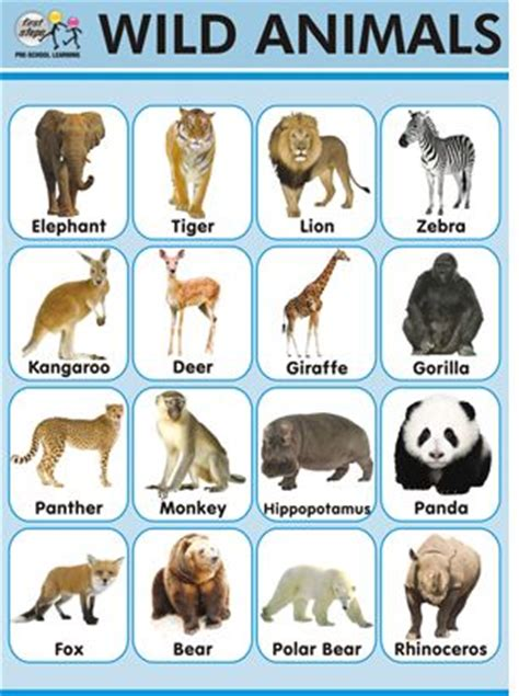 animal pattern name learning animals and charts on pinterest