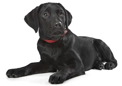names for black dogs and unique names for your black