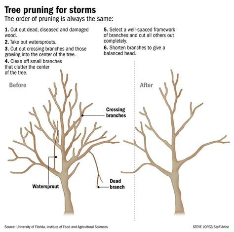 how to trim the back when going for short hair on the sides landscapes trees and yard www palmbeachdailynews com