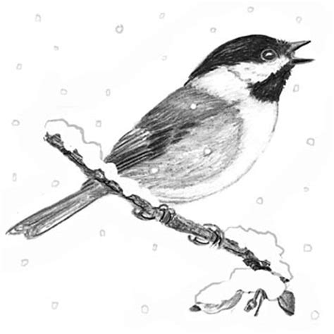 chickadee mating calls best 28 chickadee mating call best 28 chickadee mating call house in the wood black capped