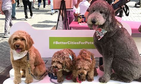 cities  pets