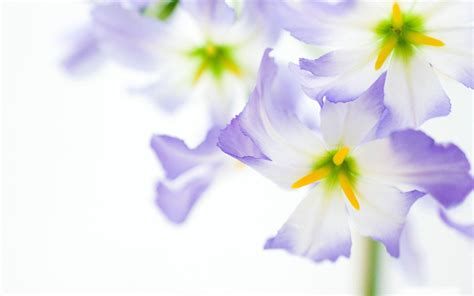 wallpaper with flowers purple flower white backgrounds wallpaper cave