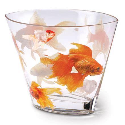Goldfish In Vase Koi Glass Vase