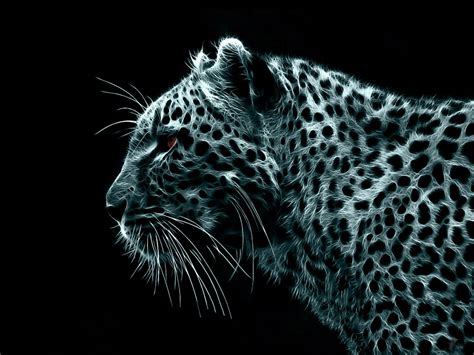 wallpaper black leopard black leopard wallpaper top quality wallpapers