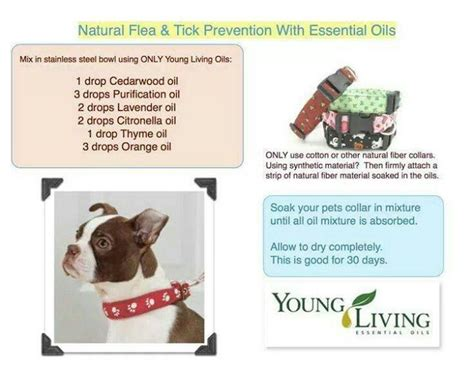 essential oils for fleas on dogs 1000 images about living pets on pets living essential oils