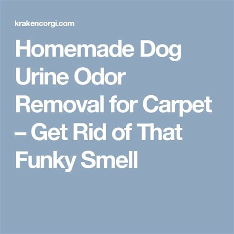 how to get urine smell out of couch the 25 best ideas about cleaning dog pee on pinterest i