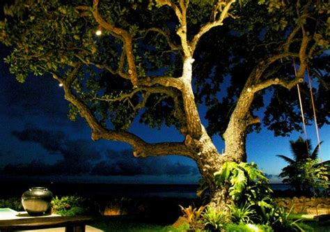 Tree Landscape Lighting Home Page Www Beachsidelighting