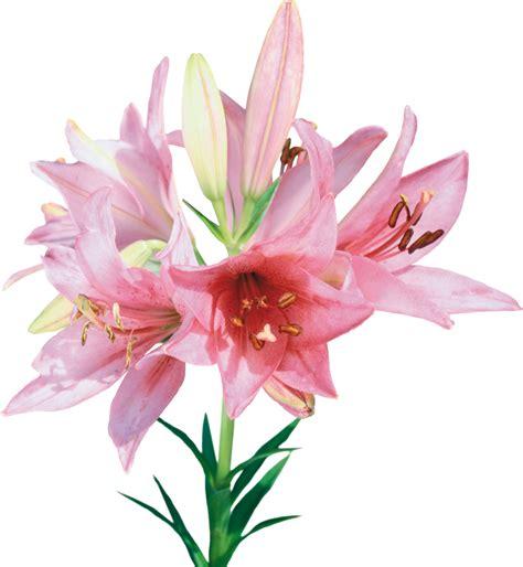 Imagenes Png De Flores | 174 gifs y fondos paz enla tormenta 174 im 193 genes de flores