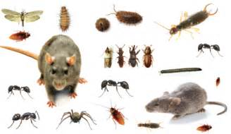 house pest pests greater the south east s leading pest