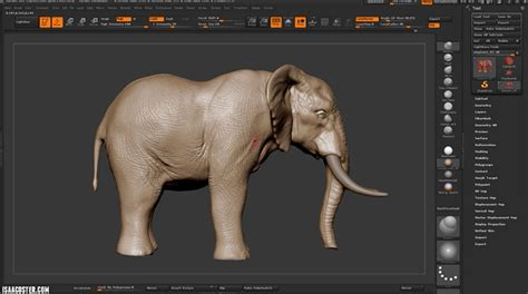 zbrush elephant tutorial sculpting an elephant in zbrush with isaac oster