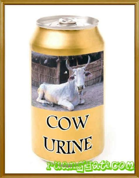 Colla Untuk Ibu Menyusui bagi umat hindu urine dan kotoran sapi pun dijadikan obat