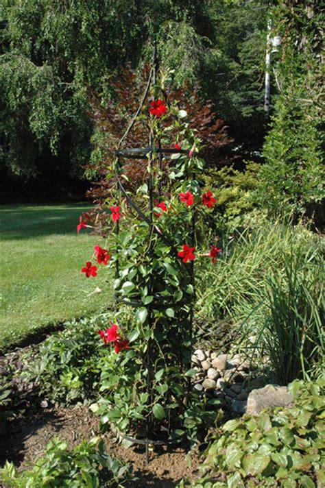 obelisk climbing plants buy garden obelisks tuteurs kinsman company