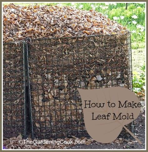 mold in compost 1000 images about backyard composting on