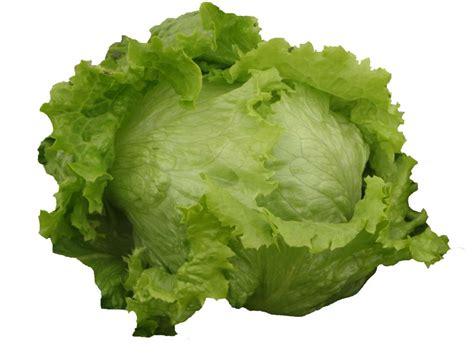 imagenes lechugas verdes 191 qu 233 lechuga puede utilizar para preparar una ensalada y