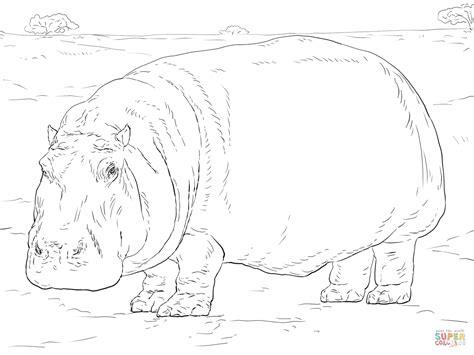 Hippopotamus Coloring Page by Hippopotamus Coloring Page Free Printable Coloring Pages