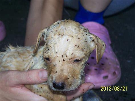 flea baths for dogs stray dogs ploiesti rsdp august 2012