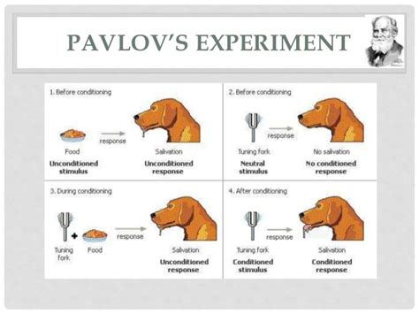 pavlov experiment pavlov s experiment