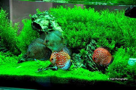 aquarium design amano indonesia aqua design amano nature aquarium cheftonio s blog