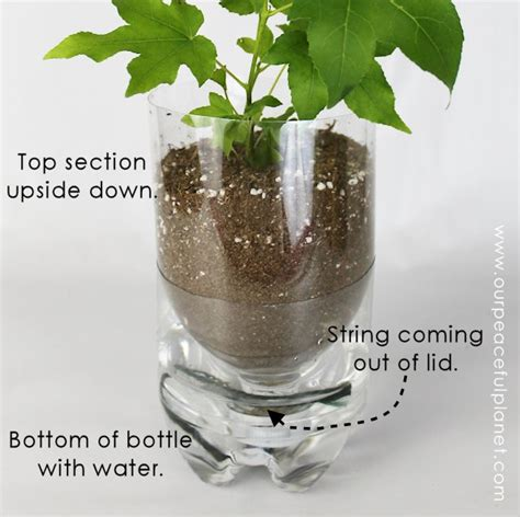 Best Self Watering Planters by Unique Planters From Soda Bottles