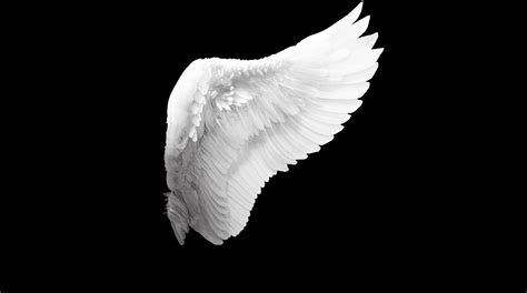 wings background wings wallpapers backgrounds