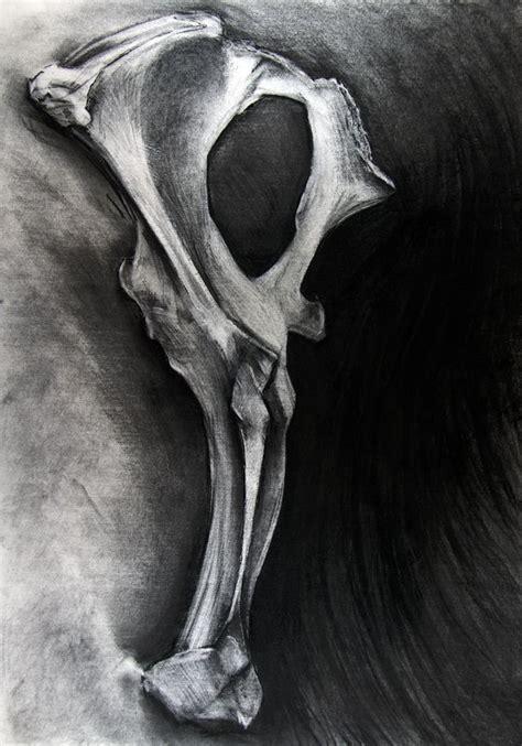 bone drawing study bone charcoal drawing drawing