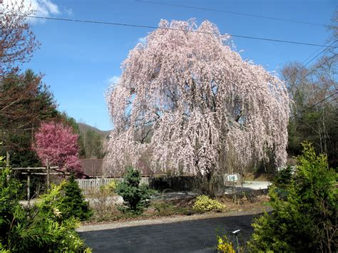 trees nc fry nursery landscaping services