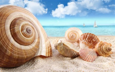 seashells hd wallpaper awesome and high quality hd wallpapers from