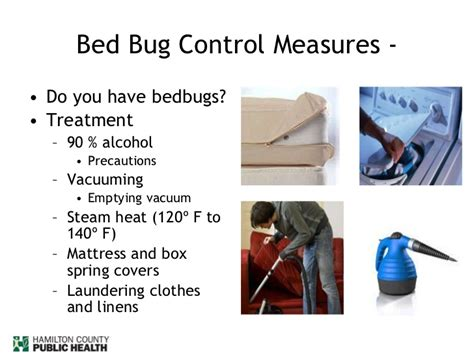 how long does it take for bed bugs to appear how to deal with bed bugs