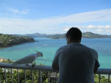 whitsunday appartments my ideal holiday destination picture of whitsunday