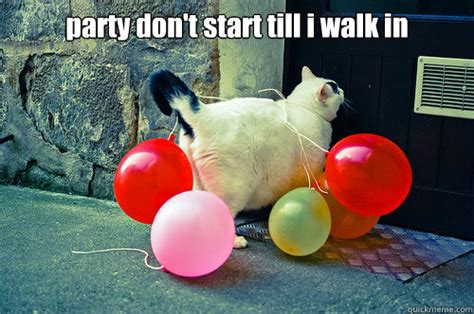 Party Animal Meme - party cat memes quickmeme