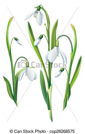 bucaneve fiori fiori isolato bucaneve fiore isolato illustrazione