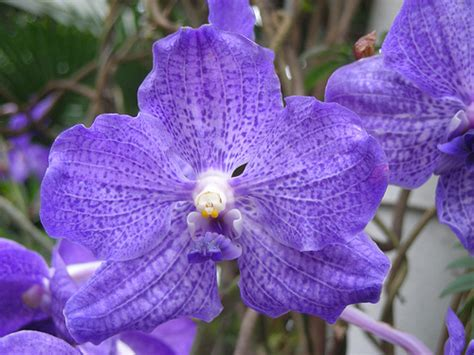 orchids facts fun flower facts vanda orchid grower direct fresh cut