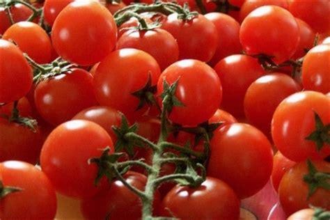 concime per pomodori in vaso concimazione pomodori domande e risposte orto