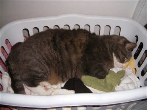 how to make a dying cat comfortable how to make a cat comfortable when dying how to know if