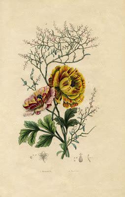vintage printable botanical floral instant art