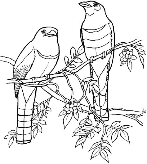 tropical bird coloring page tropical island coloring pages coloring home