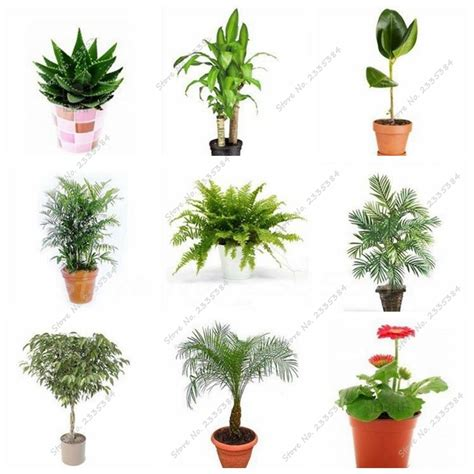 cheap indoor plants online get cheap small indoor plants aliexpress com