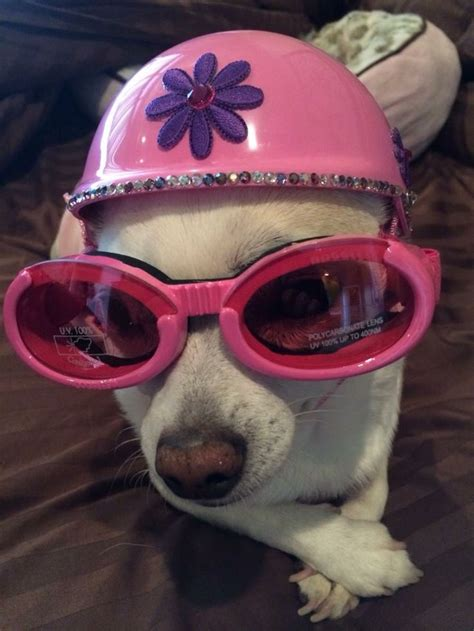puppy helmet 64 best images about doggles helmets on chihuahuas sunglasses and