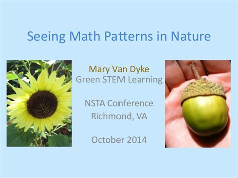 Patterns In Nature Elementary Math | seeing math patterns in nature