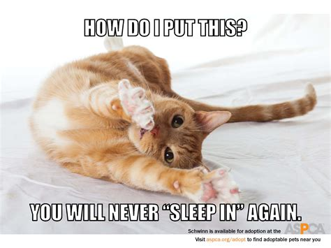 aspca meme scroll for more s day memes featuring