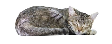 una noche un gato 8484703169 191 cu 225 ntas horas al d 237 a es aconsejable que duerma un gato bekia mascotas