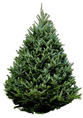 best real christmas trees in south jersey s live trees are available now here s how to buy