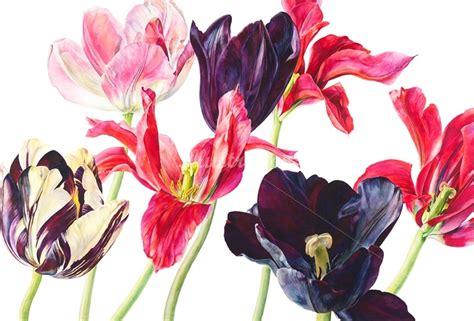 rosie sanders flowers a 1849943974 rosie sanders illustration portfolio