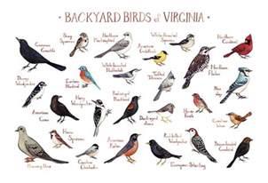 Backyard Birds Of Indiana Virginia Backyard Birds Field Guide Art Print Watercolor