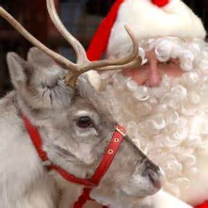 reindeer for santa s arrival and entertainment at