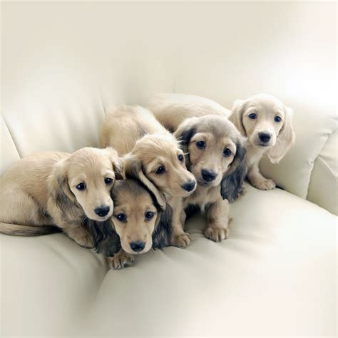 puppy co me11 puppy retriever family animal papers co