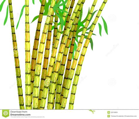 Plant of sugar cane. stock vector. Image of pieces
