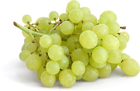 imagenes de uvas kangris fondos de pantalla frutas uvas alimentos 3d gr 225 ficos